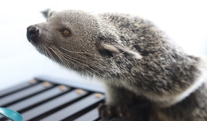 ВИркутске открывают зоопарк (Фото+Видео)
