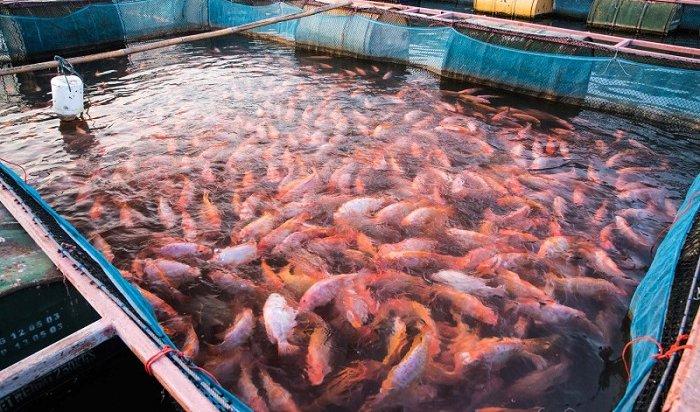 Производство аквакультуры вРоссии запервое полугодие выросло на70,6%