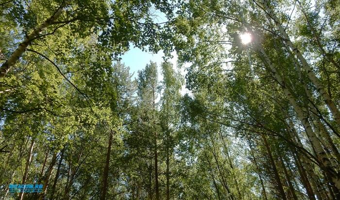 Зять ушел в лес искать тещу ипотерялся сам