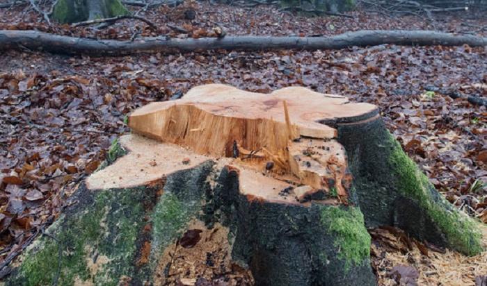 Половина незаконных рубок леса приходится наИркутскую область