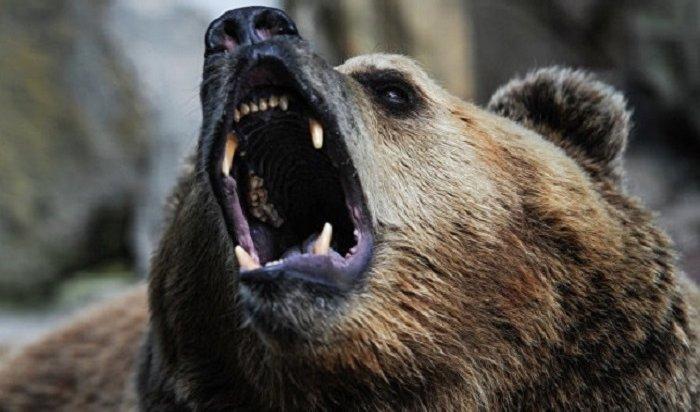 ВЯкутии медведь убил бывшего депутата вовремя охоты