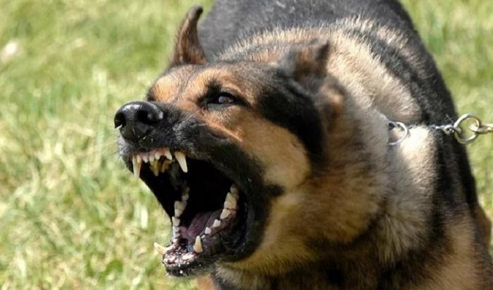 ВМЧС России дали советы поотпугиванию агрессивных собак