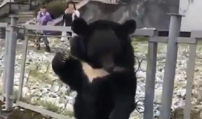 Депутат Госдумы вступился зациркового медвежонка, которого приковали кзабору вБодайбо (Комментарии)