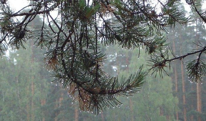 Погода испортится вИркутской области впятницу, 18октября