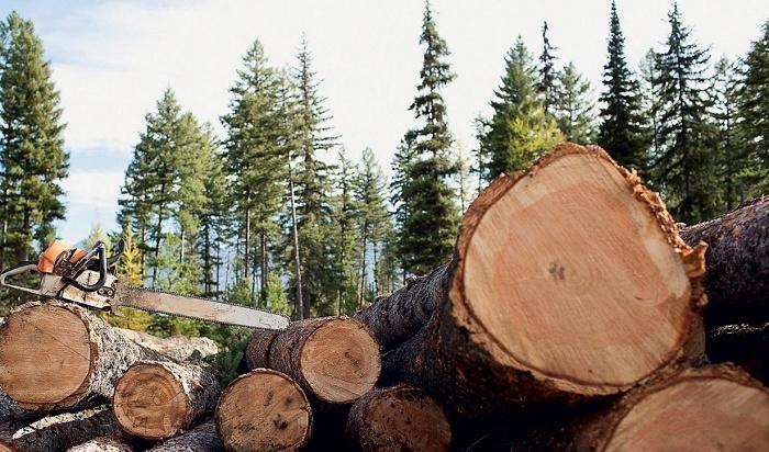 Крупномасштабные рубки леса вПриангарье предотвратили сотрудники полиции иФСБ (Видео)