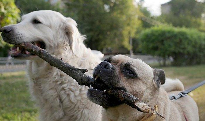 ВРоссии могут увеличить штрафы забрань, выгул собак без намордника ипоход втуалет наулице