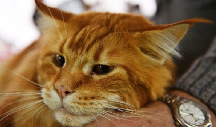 Домашние животные могут ездить пож/д без сопровождения владельцев