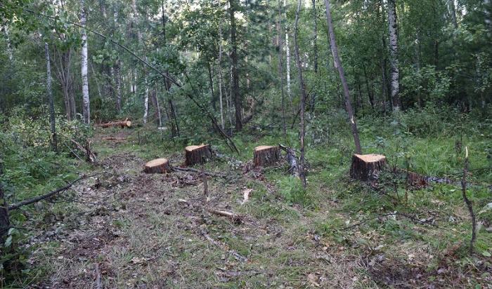 Злоумышленников, незаконно нарубивших лес на5млн рублей, задержали вИркутской области