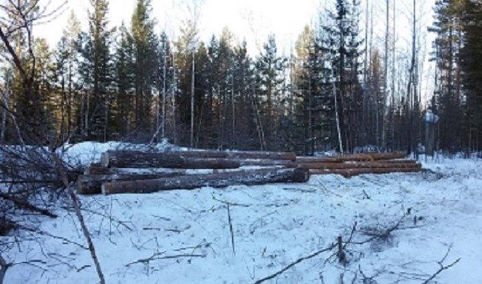 СКначал проверку пофакту незаконной рубки леса под Иркутском