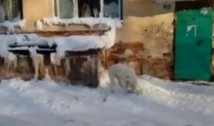 Котенок, которого пыталась спасти собака, замерз вБратске