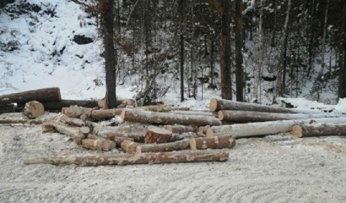 ВСлюдянском районе вырубили деревья особо ценных пород на47млн рублей (Видео)