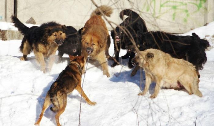 СКначал проверку после нападения бродячих собак нашкольницу вНово-Ленино