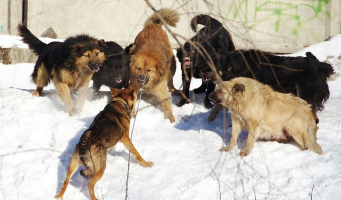 ВИркутске отловили порядка 100бродячих собак вфеврале