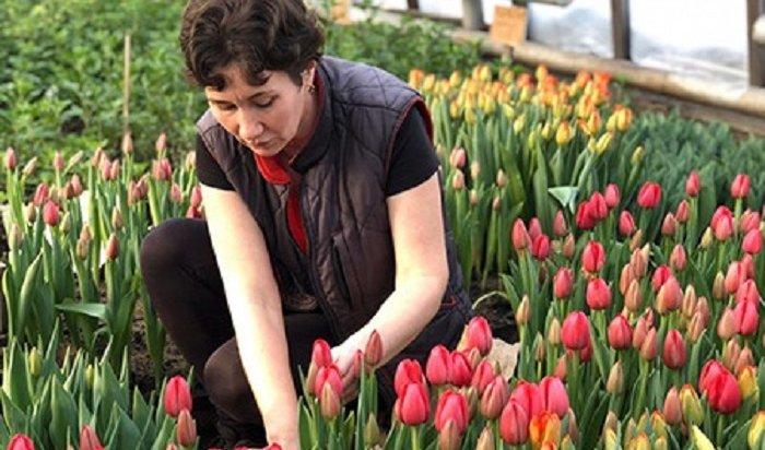 ВИркутске вырастили более 60тысяч цветов к8марта