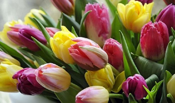 Цветы игаджеты: рейтинг подарков вИркутской области к8марта