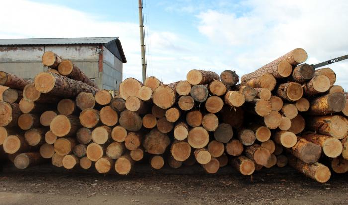 ВБратске перекрыли контрабанду леса зарубеж на50млн рублей