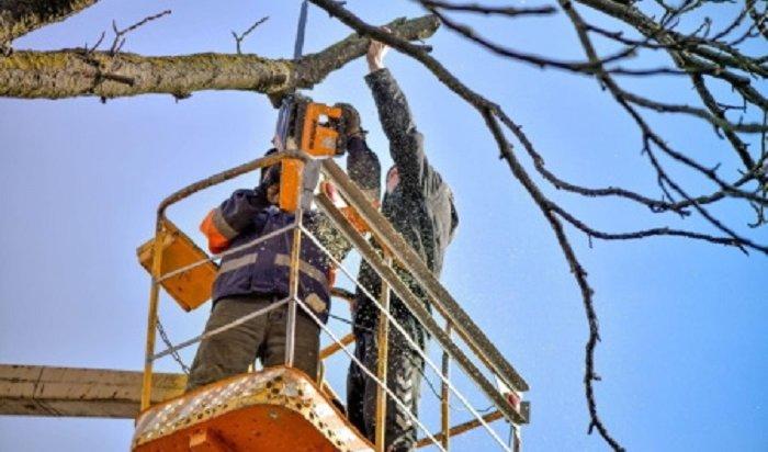 600аварийных деревьев икустарников срубят вИркутске