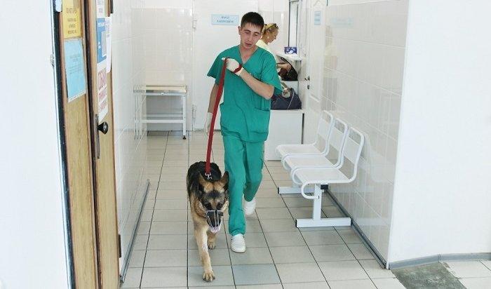 Ветеринары призывают иркутян небросать животных из-за боязни заразиться коронавирусом