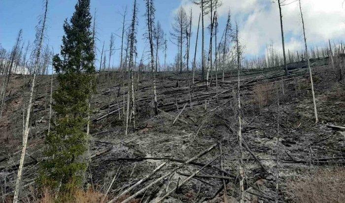 Глава МЧС Приангарья сообщил оцеленаправленном поджоге леса вКачугском районе