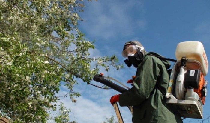 ВИркутске обработают отвредителей более 40тысяч деревьев икустарников