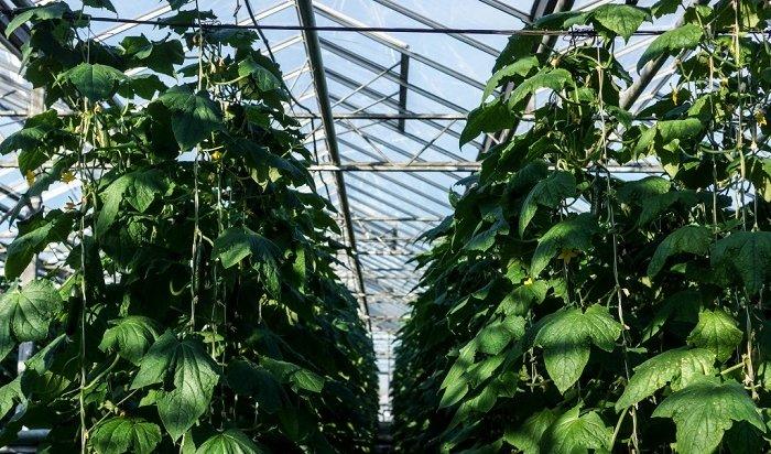 ВИркутске начали работать садоводческие маршруты