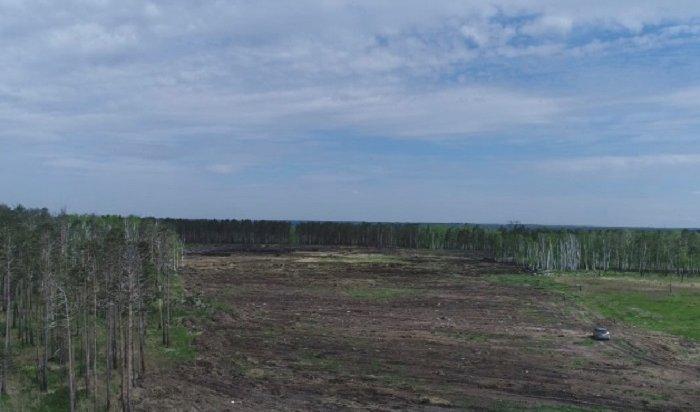 ВИркутской области уничтожают поля сдикорастущей коноплей