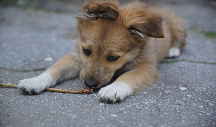 Под Иркутском задержали дачного вора, который совершал преступления ради своих собак (Видео)