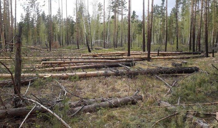 Более одной тысячи незаконных рубок выявили вИркутской области
