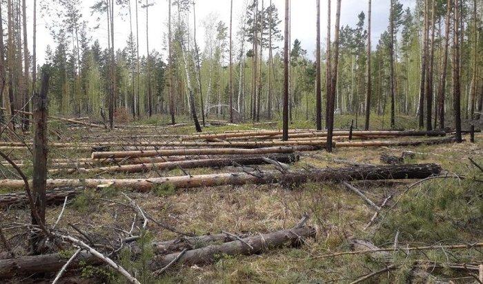 Кобзев встретится сзаместителем гендиректора РЖД повопросу рубки леса наБайкале
