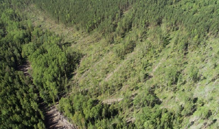 Активисты выявили факт фиктивной посадки леса вТайшете