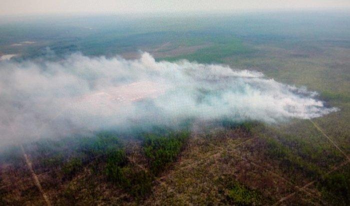 ВПриангарье горит более 7500гектарлеса