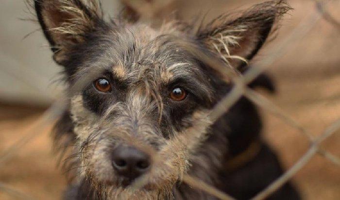 Акция вподдержку бездомных собак пройдет вИркутске 29августа