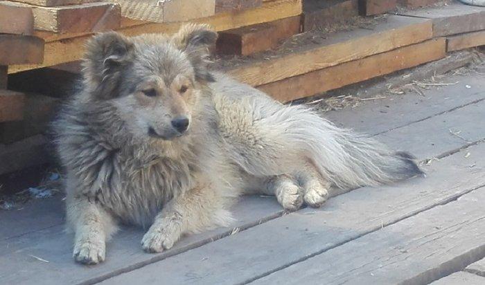 Сбор помощи бездомным собакам пройдет вэту субботу вИркутске