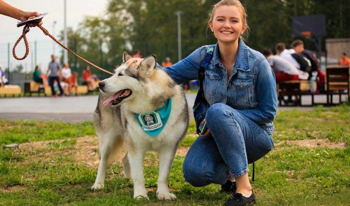 Приют «Ной-ПовоДог» провел акцию вподдержку бездомных собак 29августа вИркутске (Фоторепортаж)