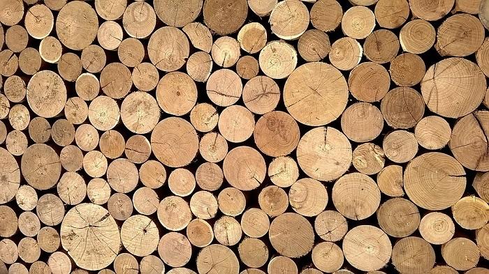 Ущерб отнезаконных рубок леса вПриангарье вэтом году уменьшился на1млрд 874,9млн рублей посравнению стемже периодом 2019года