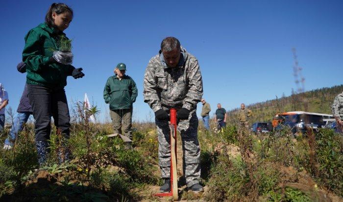 Более 79тысяч гектаров леса восстановили вИркутской области
