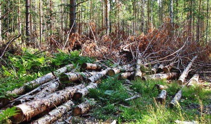 ВИркутской области организатор нелегальной рубки леса приговорен к3годам тюрьмы
