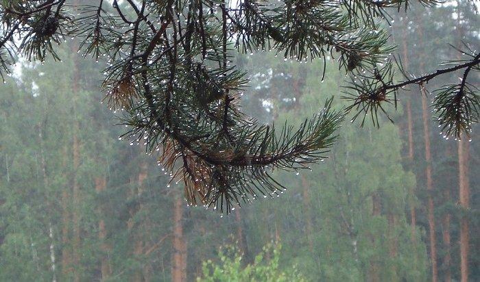ВПриангарье потушили два лесных пожара