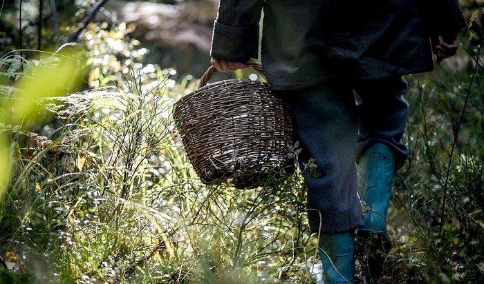 В Иркутском районе полицейские разыскивают заблудившуюся в лесу женщину