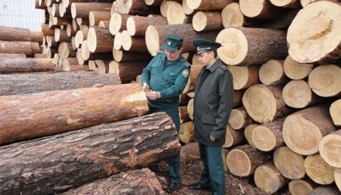 Таможенники выявили контрабанду древесины на16млн рублей