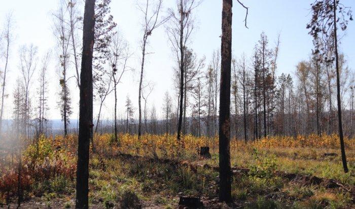 С сегодняшнего дня в Иркутской области закрыт пожароопасный сезон