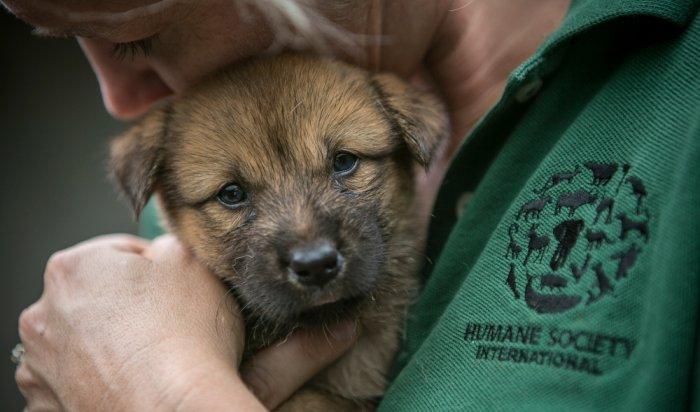 Служба ветеринарии Иркутской области будет отвечать на вопросы жителей по телефону
