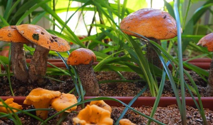 Жительница Шелехова стала жертвой аферистов при покупке грибов