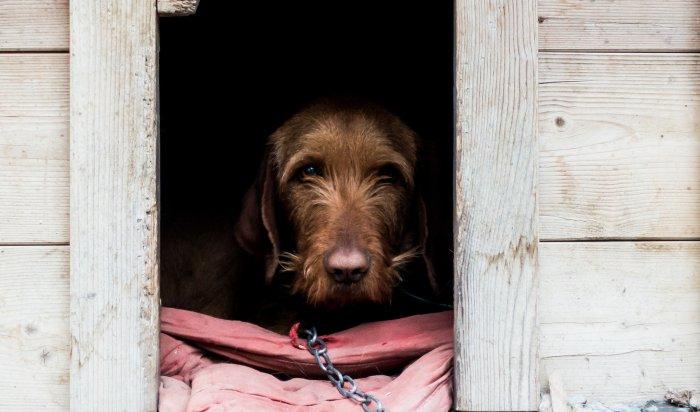 Иркутян приглашают на строительство будок для собак из приюта «Пять звезд»
