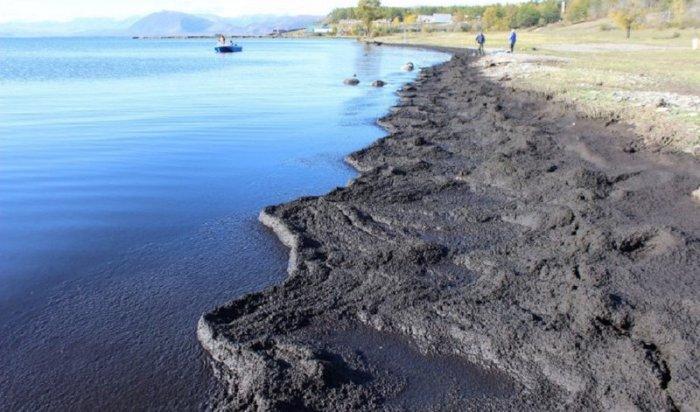 НаБайкале массово распространяется спирогира, которая приводит кнегативному изменению экосистемы озера