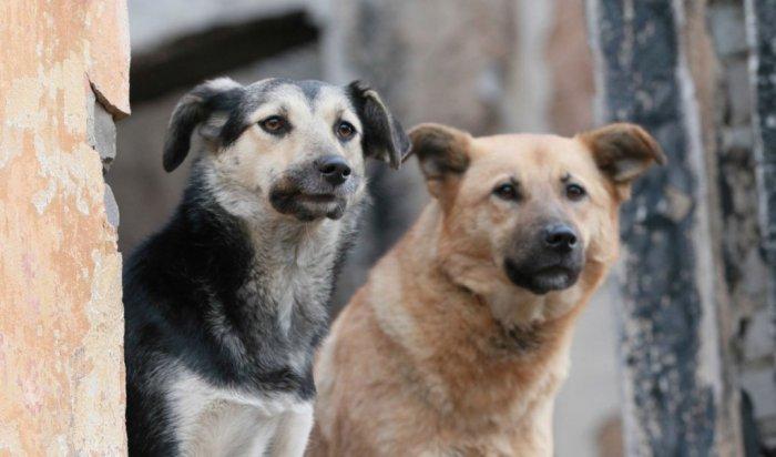 ВИркутской области разработают концепцию развития сети приютов для бездомных животных