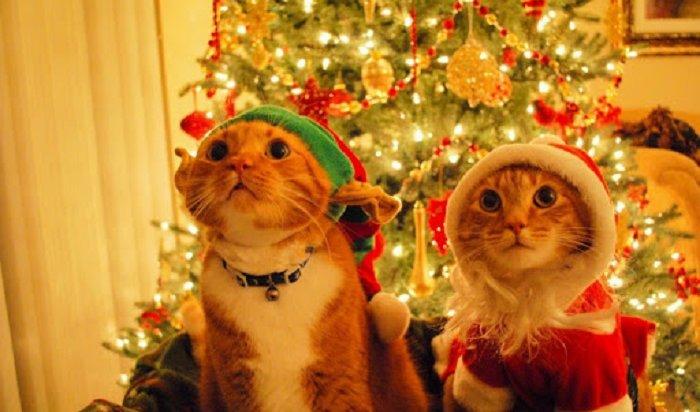 ВРоссии предлагают отказаться отдлинных новогодних выходных