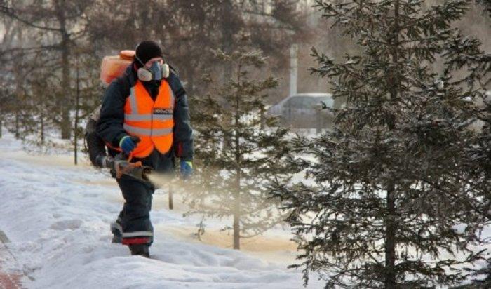 14декабря вИркутске начнется предновогодняя обработка деревьев