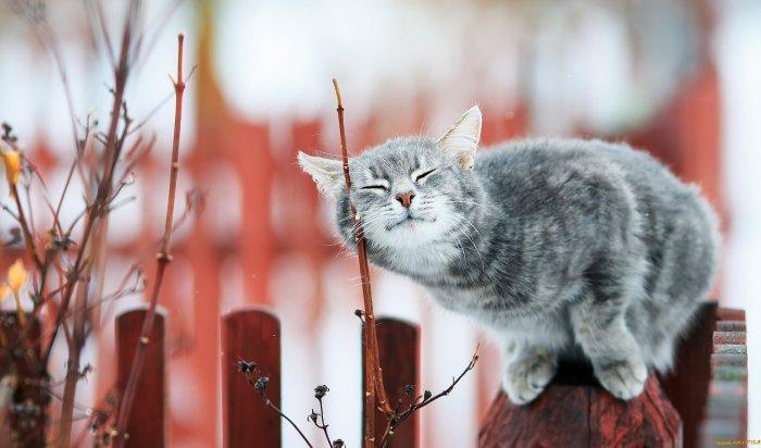 Потепление до-7градусов ожидается ввыходные вИркутске
