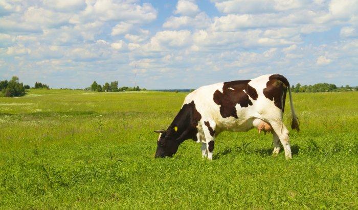 ВТулунском районе открыли семейную молочную животноводческую ферму